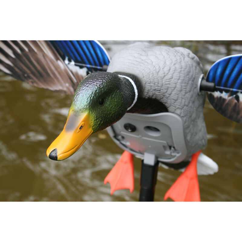 MOJO Outdoors King Mallard Drake Magnetic Motion Spinning Wing Decoy with Remote Receiver and Support Pole
